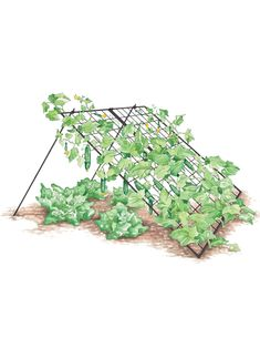 Squash Trellis - Vegetable Trellis: Wire A-Frame Gardener's Supply Pea Trellis, Tomato Trellis, Cucumber Trellis, Tomato Cages, Garden Trellis, Building A Trellis, Growing Tomatoes, Gardening Supplies, Raised Garden Beds