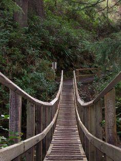 Oswald State Park. Oregon Coast. Wooden bridge.