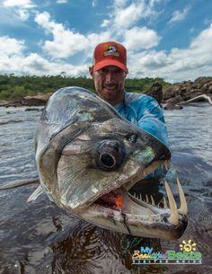 Vampire Fish caught by Will Flack in Venezuela.