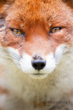 Up Close and Personal by Lawrie Brailey on 500px