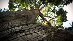 Amazon deforestation – Brazil at a crossroads