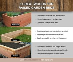 Three great choices of wood for building raised garden beds.