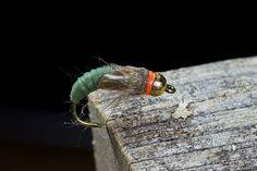 Olive pupa   Flickr - Photo Sharing!