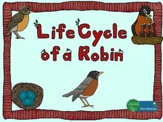 Great activity for teaching the life cycle of a Robin.Contains 13 pages.Life Cycle wheel activity for students to label each phase of the life cycle, read about it, color and cut.  Use a brad to attach the cover so it turns to reveal each phase.Teacher full color sample is included so you don't have to color one!Story Cards:  Each phase has a large picture teaching card with interesting, fun facts on the back for you to read and teach.