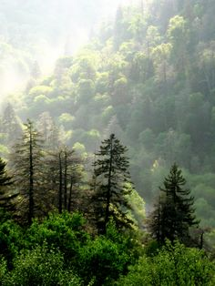 Smoky Mountain Forest Trees
