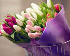 Tulips Bouquets wallpapers and stock photos