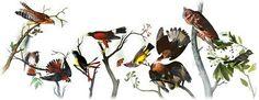 Google birds