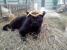 Le roi des chats noirs