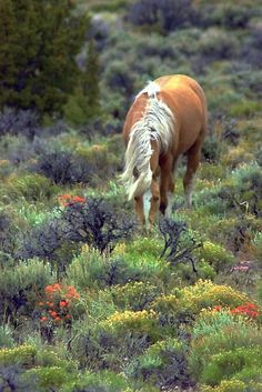 Gorgeous palomino horse in a colorful field Most Beautiful Animals, Beautiful Horses, Beautiful Creatures, Horse Photos, Horse Pictures, Palomino, All About Horses, Majestic Horse, All The Pretty Horses