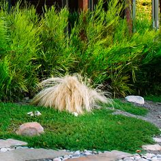 Lawn alternative - Designing with Drought-Resistant Plants - Sunset