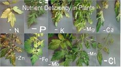 The world of soil and nutrients can be confusing, especially when there are 16 elements that are essential for plant growth. It's more than just NPK out there, folks!