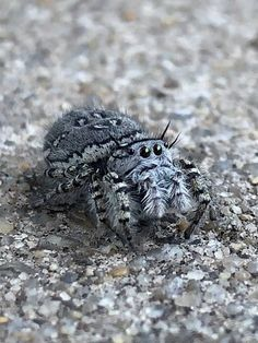 Jumping Spider, Albert Einstein, Natural World, Frogs, Beautiful Creatures, Camouflage, Real Life, Spiders, Weird