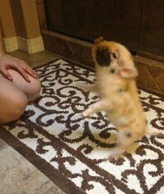 adorable little pigg!