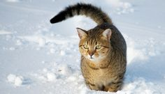 Hypothermia in Cats: Symptoms and What to Do | CatTime