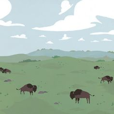 Grasslands - Majestic bison roaming the rolling grasslands.  Grasslands landscape artwork.