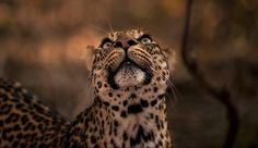 Photographer and African wildlife specialist, Greg du Toit, offers the very best private and small group safaris in Africa, for the discerning photographer. Wildlife Photography, Safari, Fine Art Prints, African, The Incredibles, Gallery, Animals, Animales, Roof Rack