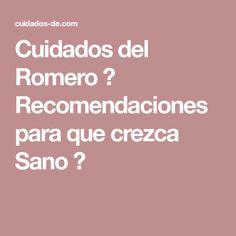 Cuidados del Romero ✤ Recomendaciones para que crezca Sano ✤
