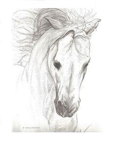 "Horse, Horse Drawing, Horse Print, Horse Pencil Drawing, Drawing, Pencil Drawing Print, Horse Decor, Western Decor, Country Decor  9"" x 12"""