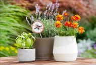 Les meilleures plantes pour éloigner les moustiques