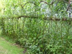 willow fence at ryton