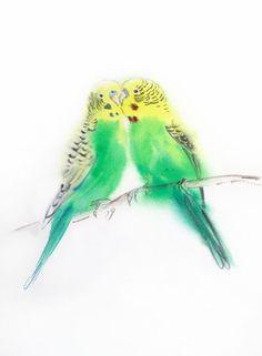Поцелуй попугайчиков - любовь пара волнистый попугайчик попугай - птицы пары - День Святого Валентина