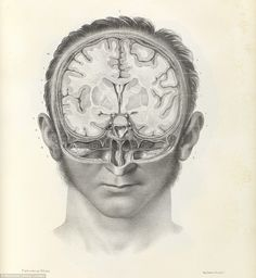 Macabre: An 1844 image shows a vertical cross section of the human brain. The new book, Crucial Interventions, was created from images taken from the Wellcome Collection's library
