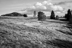 Autumn - shared with pixbuf.com #landscape #nature #bw #monochrom #leica #countryside