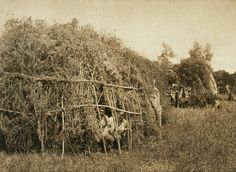 Brush huts, animal dance encampment - Cheyenne (The North American Indian, v. XIX. Norwood, MA, The Plimpton Press,  1930) by Edward Sheriff Curtis from University of Southern California Libraries