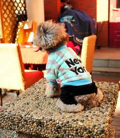 $15.22 T-Shirts for Dogs To Wear