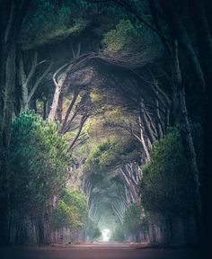 The forest is a wonderful fairytale. Scenic Photography, Landscape Photography, Nature Photography, Fantasy Landscape, Landscape Photos, Beautiful Landscapes, Beautiful Images, Tree Tunnel, Photo Backgrounds
