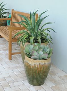 An agave and kalanchoes are planted in this container garden by Pamela Crawford…