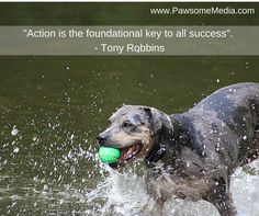 Dog Training And You: Simple Ideas To Make It Work >>> Learn more by visiting the image link. Choosing A Dog, Easiest Dogs To Train, Pet Dogs, Pets, Dog Training Tips, Dog Lovers, Puppies, Animals, Image Link