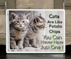 Cute Cat Signs | ... Pet Signs/Cat Lover Gift/Pet signs/Cat signs/Funny signs/Cute signs