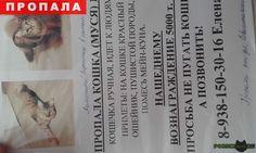 Пропала кошка г.Ростов-на-Дону http://poiskzoo.ru/board/read23847.html  POISKZOO.RU/23847 Пропала наша любимица Муська мы ее очень любим помалите! Пропала .. г. На третий день после переезда вечером ухрдя из дому он была после прихода домой с работы ее нет ни где умоляю кто видел сообщите моя дочка плпчет от переживаний в больнице.   РЕПОСТ! @POISKZOO2 #POISKZOO.RU #Пропала #кошка #Пропала_кошка #ПропалаКошка #Ростов # #РостовнаДону #Ростов_на_Дону