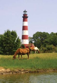 Chincoteague Island, VA...my home away from home <3