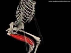 Squat exercise - anatomy analysis