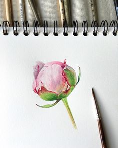 Trendy tattoo watercolor peony 21 Ideas You are in the right place about tattoo dragon Here Peony Drawing, Peony Painting, Watercolor Drawing, Watercolor Paintings, Watercolor Feather, Watercolor Flowers, Botanical Drawings, Botanical Art, Art Graphique