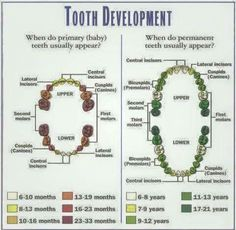 Tooth Development for primary and mixed dentition.  #good_morning #kuwait #kuwaiti #kuwaitcity #kuwaitinstagram #kuwaitphoto #kuwaity #q8 #kuw #kw #middleeast #beautiful #home #hot #sun #ksa #coffee#instaq8 #instagramq8 #q8instagram #qatar #q8pic #q8photo #beautiful