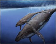 Humpback whale with baby