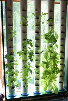 Are you wondering what is Aquaponics? The most simple definition is that it is…