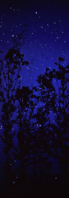 Star Field-Thistle By Susan Derges, 2003