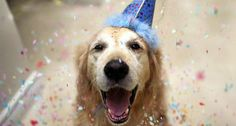 Champ: The Happiest Dog In the World http://shar.es/EjFpP
