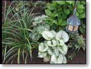 Brunnera with Liriope, Japanese Painted Fern & Hydrangea (Image copyright Garden Mentors inc via gardenhelp.org)