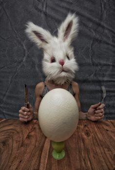 Life of bunny Decay, Bunny, Life, Animals, Beauty, Cute Bunny, Animales, Animaux, Animal