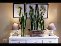 How to Care and Arrange Snake Plants in a Glass Vase and Beautiful Planter as Indoor Decoration Snake Plant Propagation, Plant Cuttings, Plant In Glass, Glass Vase, House Plant Care, House Plants, Snake Plant Care, Vertical Wall Planters, Cactus Planta