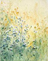 Meadow by mashami