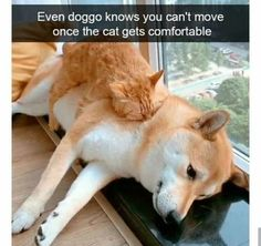 Funny Animal Memes, Animal Jokes, Funny Animal Pictures, Cat Memes, Funny Dogs, Cute Little Animals, Cute Funny Animals, Funny Cute, Cute Cats