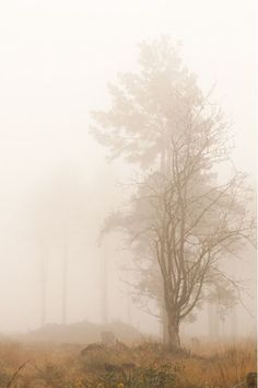 Beautiful Tree Autumn Mists Ideas For 2019 Beautiful World, Beautiful Places, Misty Day, Mother Nature, Nature Photography, Scenery, Earth, Painting, Late Autumn