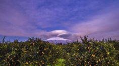 Sizilien im Winter - schneebedeckter Ätna trifft auf reife Orangen. Mehr zum Überwintern auf Sizilien könnt ihr hier erfahren: http://www.trip-tipp.com/sizilien/tipps/ueberwintern.htm #sicily #sicilia #etna #italy #italia #italien