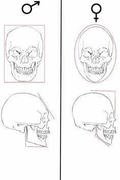 Anatomy Drawing Tutorial male and female skull differences by olgatarta - Anatomy Sketches, Anatomy Art, Anatomy Drawing, Human Figure Drawing, Figure Drawing Reference, Anatomy Reference, Female Skeleton, Skeleton Anatomy, Human Skull Anatomy